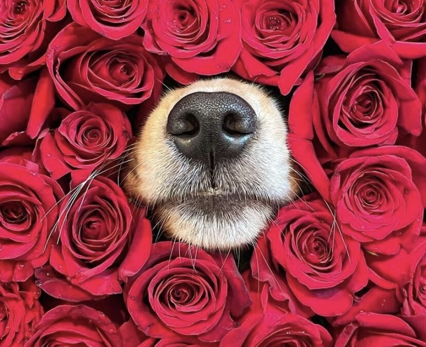 Be my Valentine …